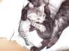 chatons Mau Egyptien Silver & Smoke