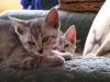 chatons de Eli-Ora le 02.06.2011