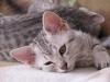 Eli-Ora's kittens 02.06.2011