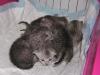 Eli-Ora & her babies on 20.04.11