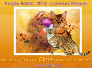 Egyptian Mau Esater wishes 2015